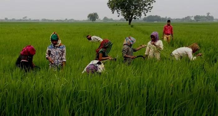 बीजेपी शासित राज्य MP में कॉन्ट्रैक्ट फार्मिंग के शिकार हुये किसान, तो हुज़ूर देश के किसानों का क्या होगा, ये बानगी है कानून की ?